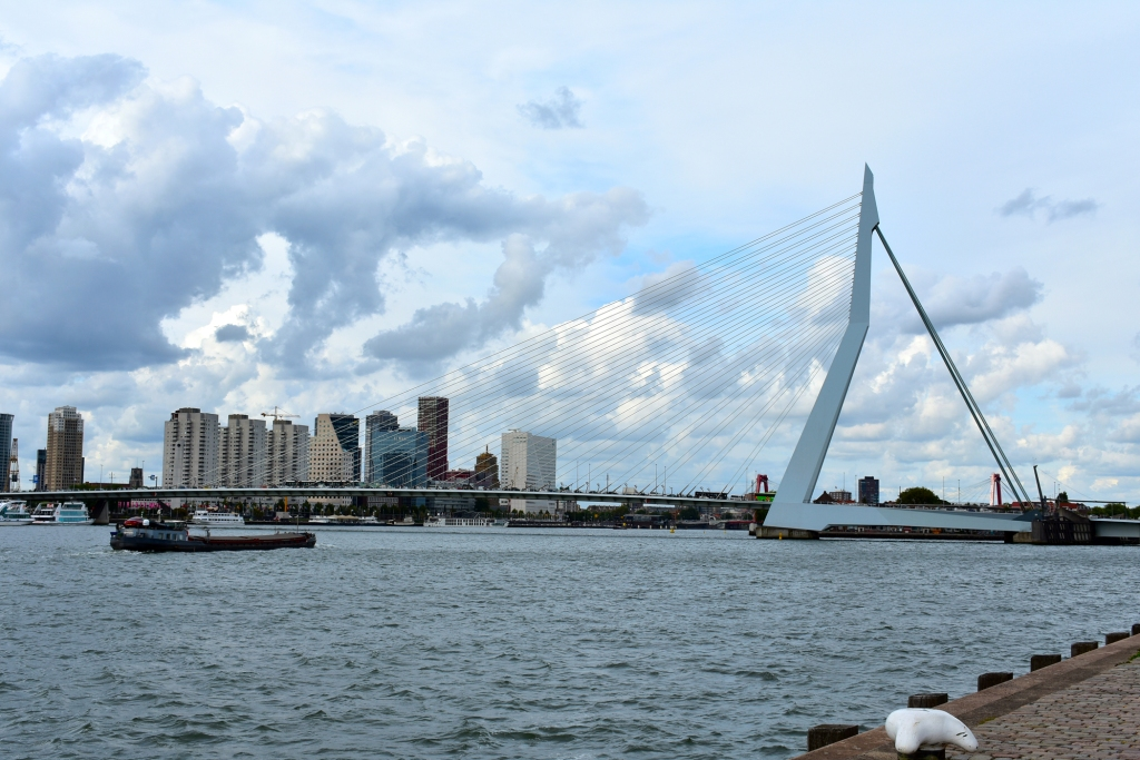 View of Erasmusbrug from the shore.