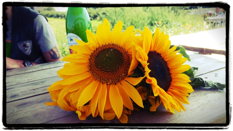 A bunch of freshly picked sunflowers on a wooden table.