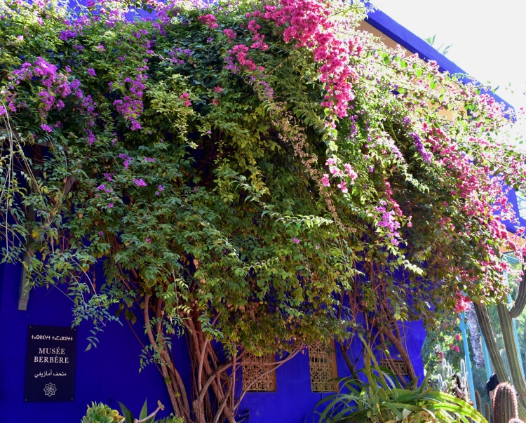 "The vibrance of Majorelle blue combined with the ""natural"" colour of a tree"