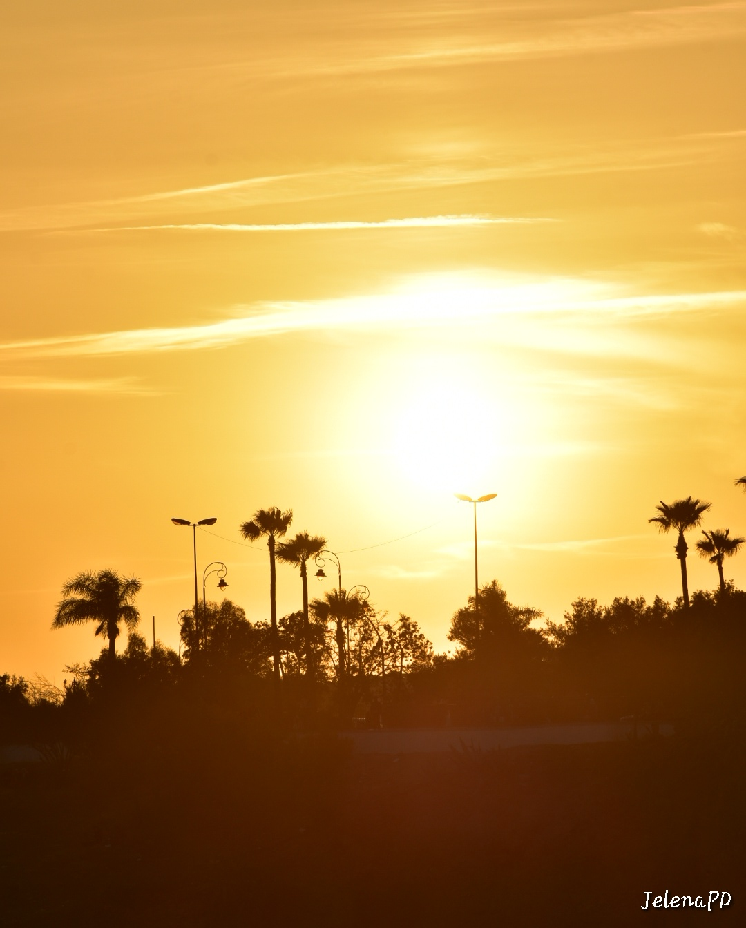 Sun setting behind the silhouettes of palm trees.