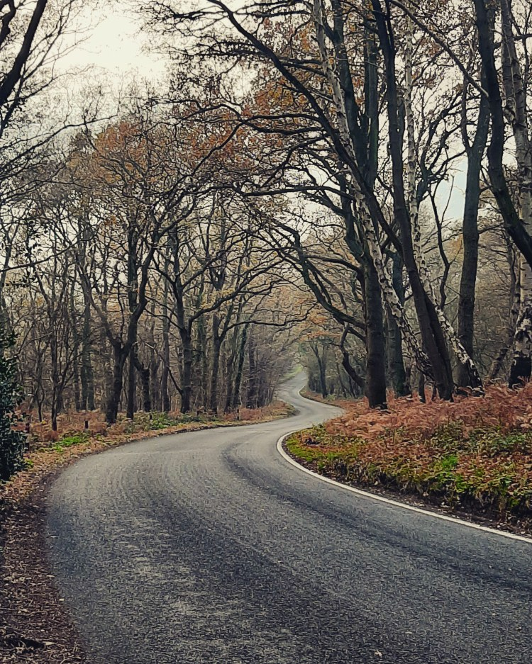 And empty winding road in a middle of a forest. It is winter and the trees are bare.