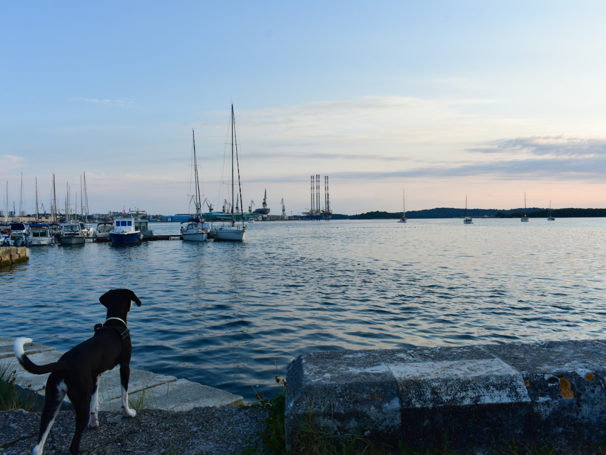 The pinkish sky of the Pula sunset. Our dog is looking over the water.