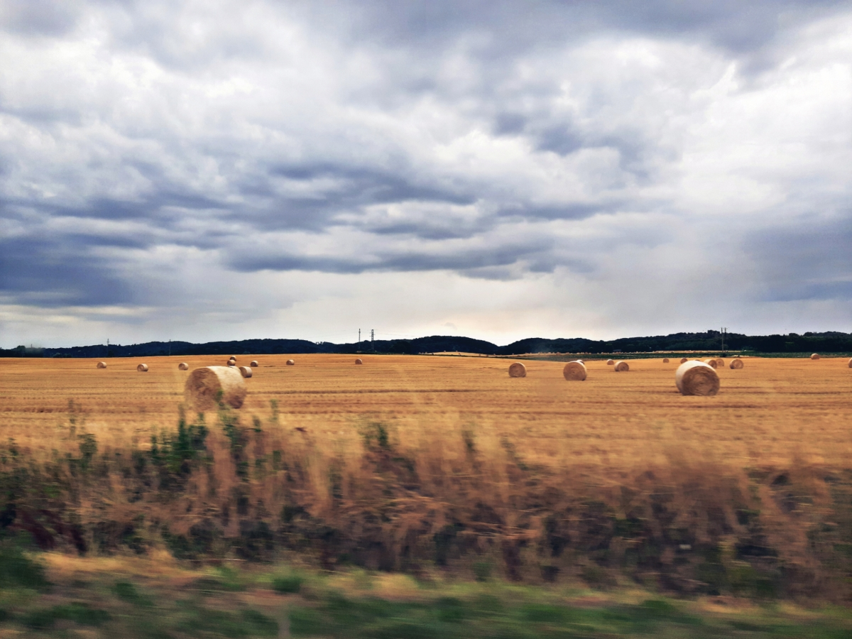 A field of hay stacks under a stormy sky taken from a moving car